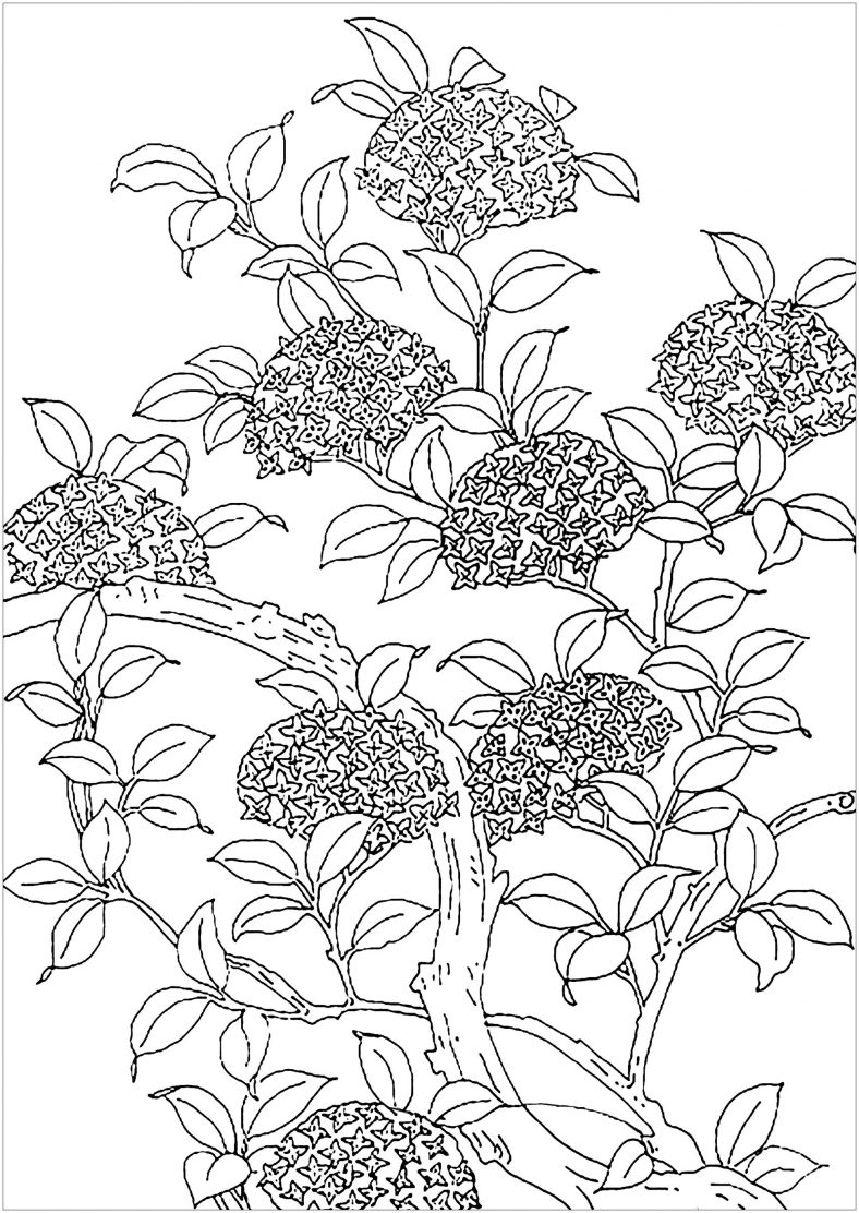 Adult Coloring Sheets Floral