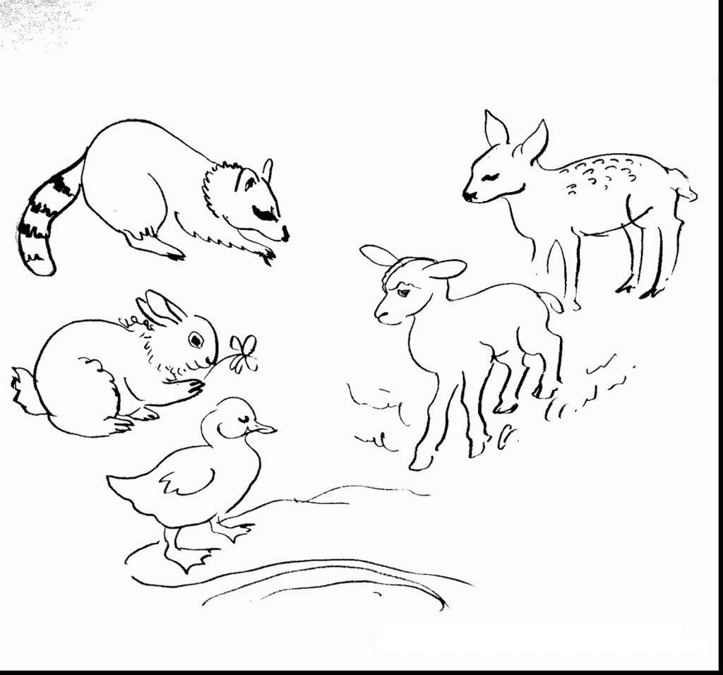 Baby Animal Coloring Pages Spring