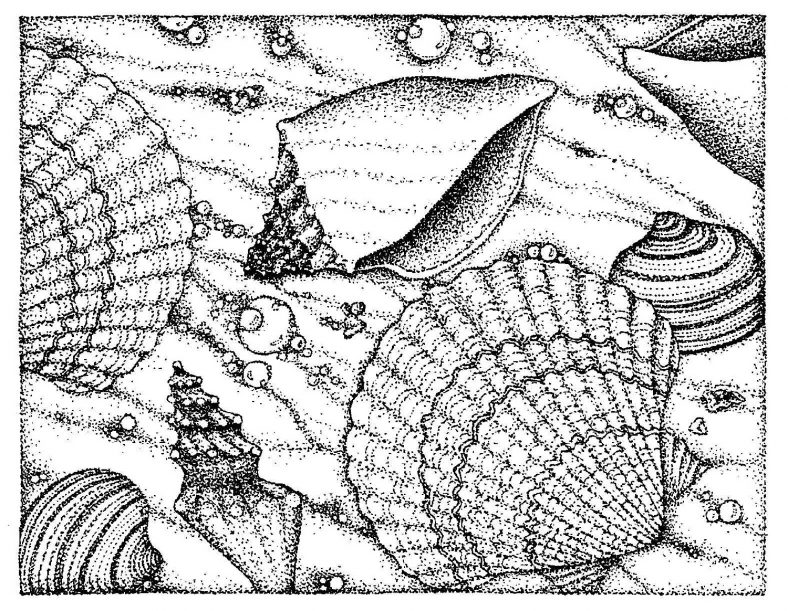 Beach Coloring Pages Sea Shell