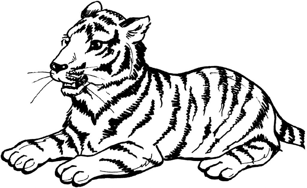 Big Kitty Cat Coloring Pages