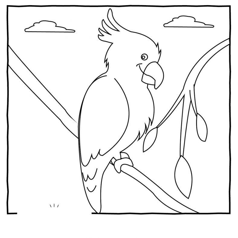 Bird Coloring Pages Animal