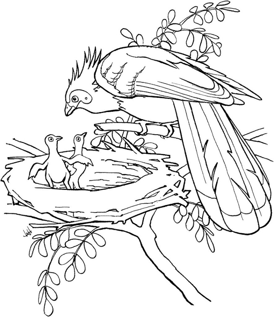 Bird Coloring Pages Nest