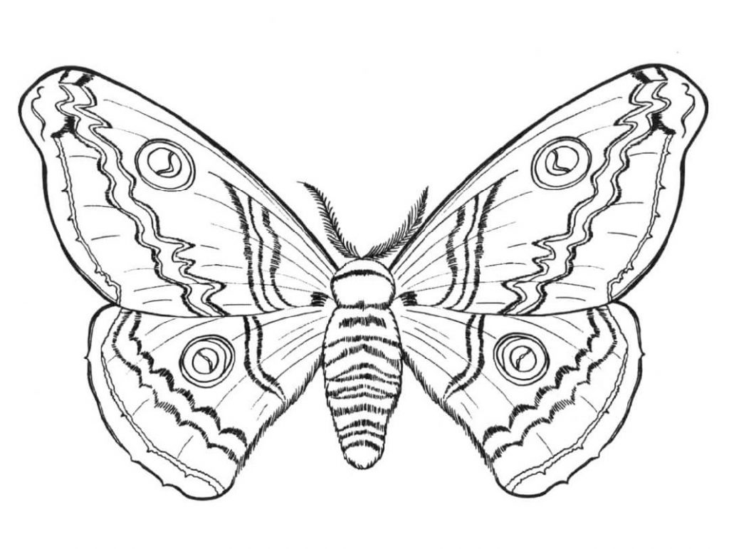 Butterfly Coloring Detailed