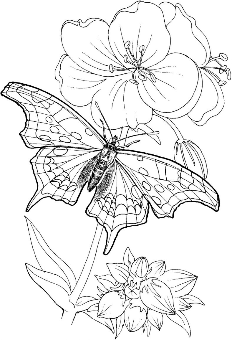 Butterfly Coloring Pages And Flower