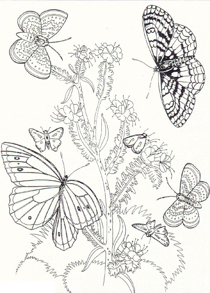 Butterfly Coloring Pages To Print