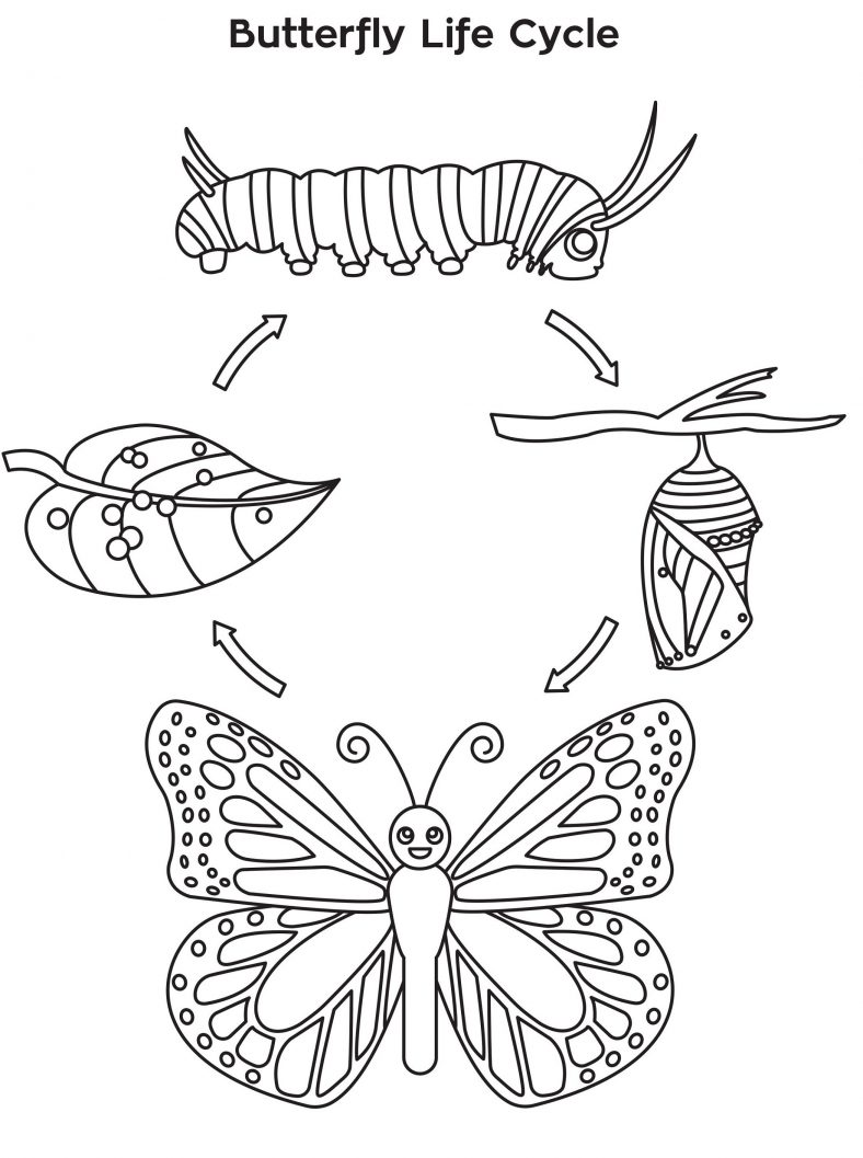 Butterfly Coloring Sheet Life Cycle