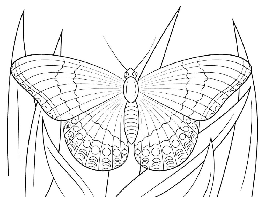 Butterfly Coloring Sheet Printable