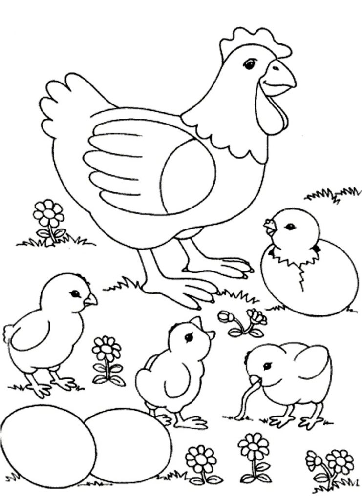 Chicken Coloring Pages Animal
