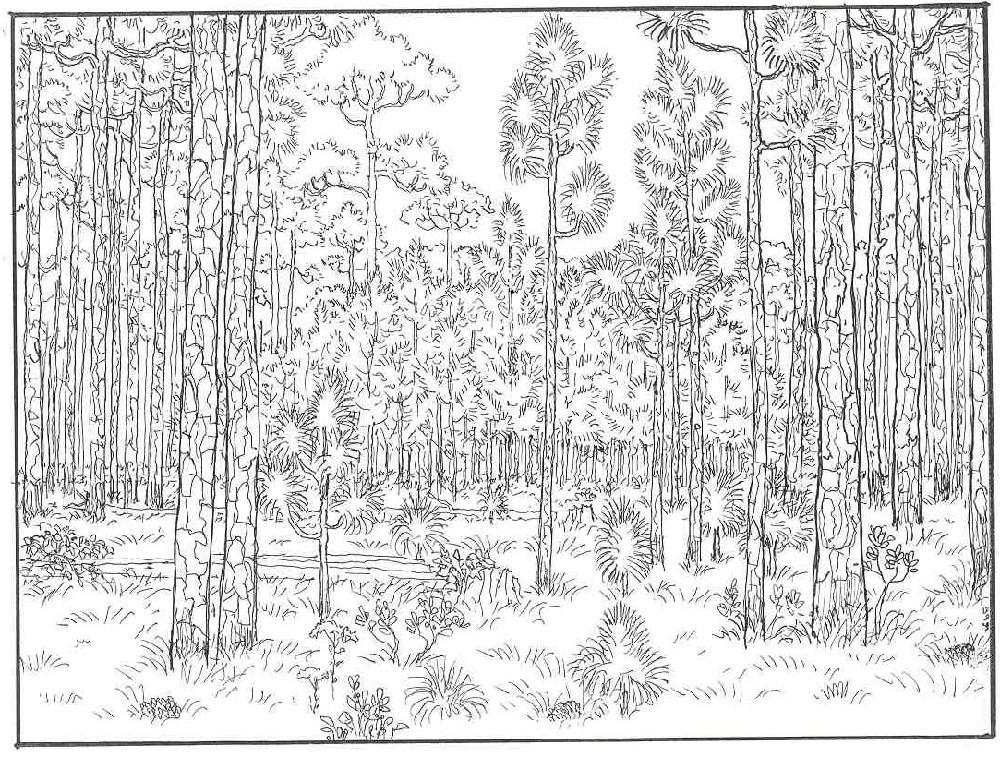 Coloring Worksheets Landscape