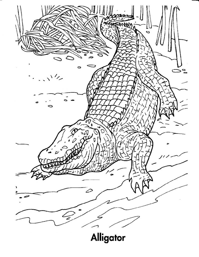 Crocodile Coloring Pages Advanced