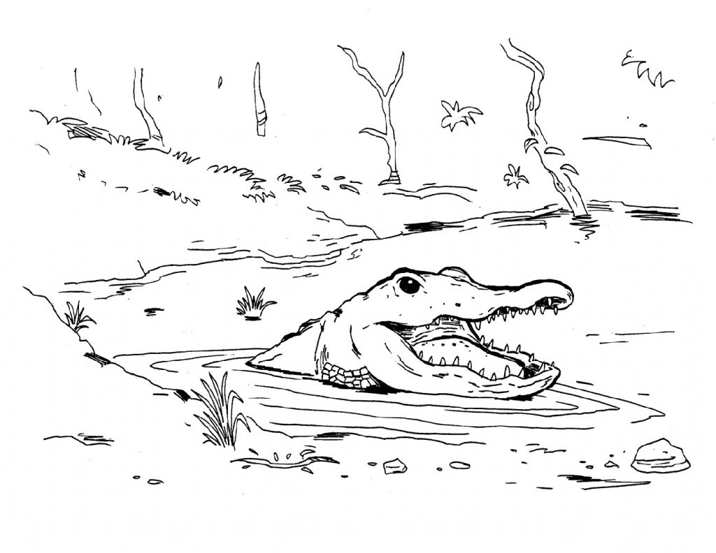 Crocodile Coloring Pages Swimming