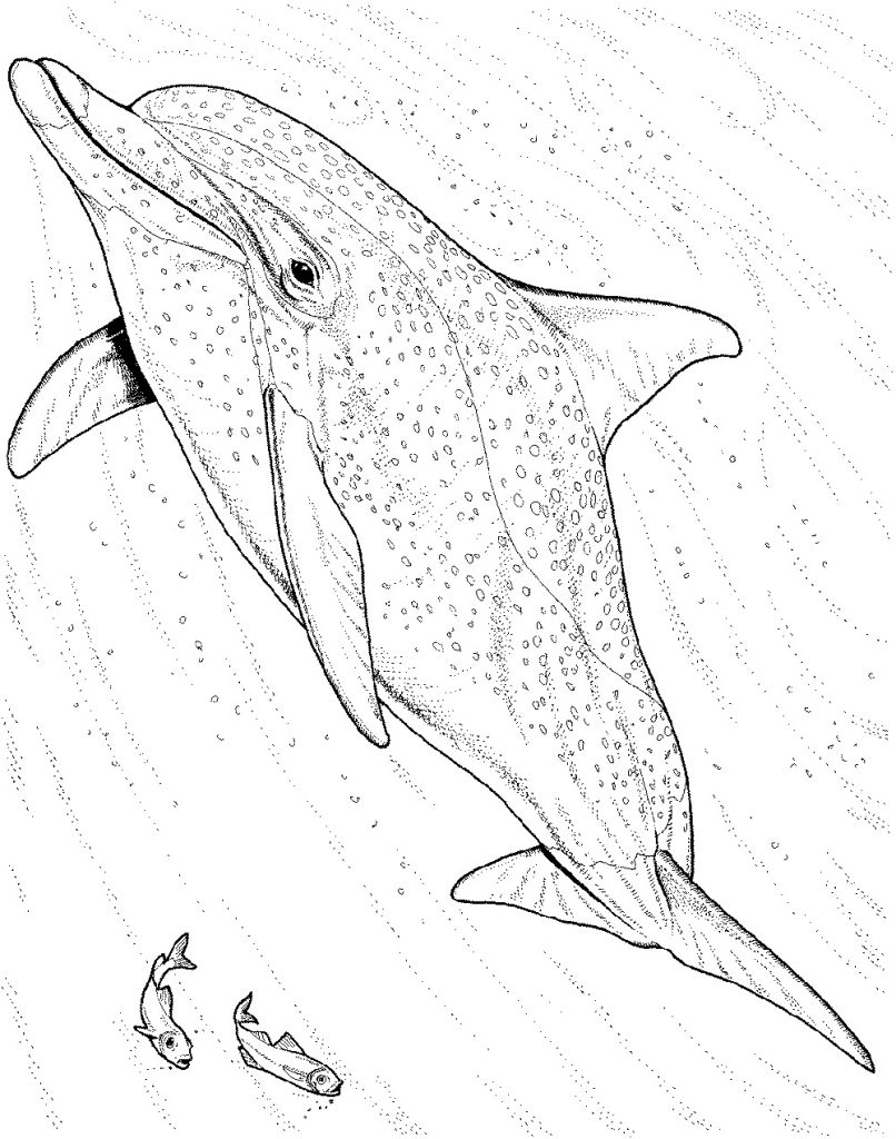 Dolphin Coloring Pages Realistic