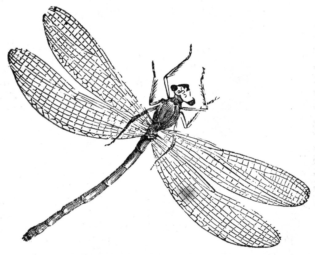 Dragonfly Coloring Page Realistic