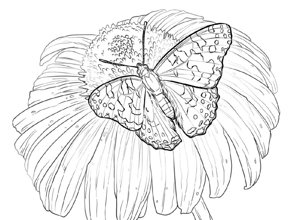 Flower Coloring Pages With Butterfly