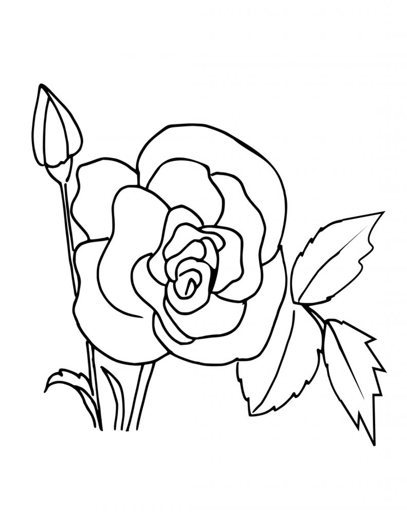 Free Printable Coloring Pages For Girls Rose