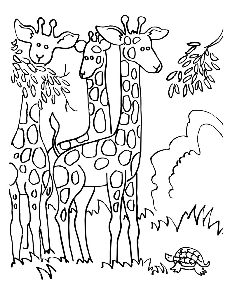 Giraffe Coloring Pages Eating