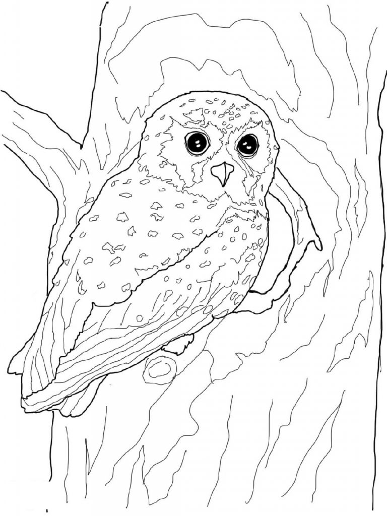 Hoot Owl Coloring Pages