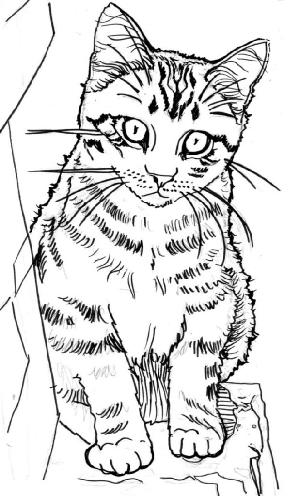 - Cute Kitten Coloring Pages For Kids 101 Coloring