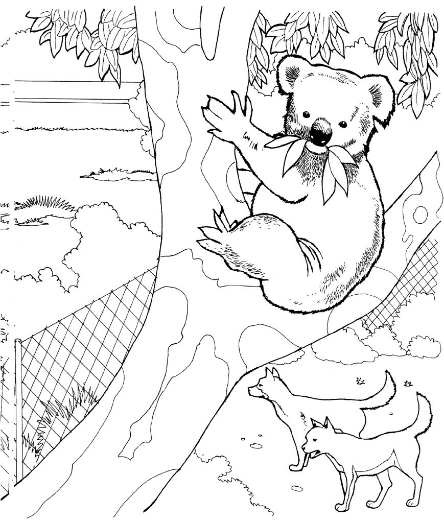 Koala Coloring Pages Free