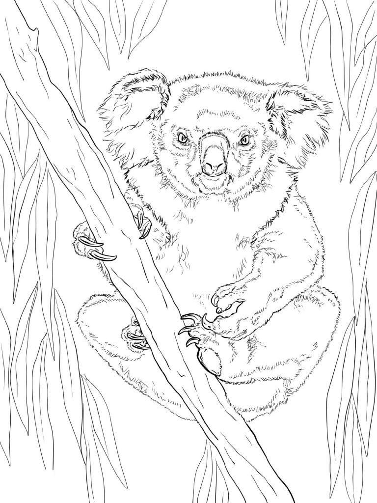 Koala Coloring Pages Realistic