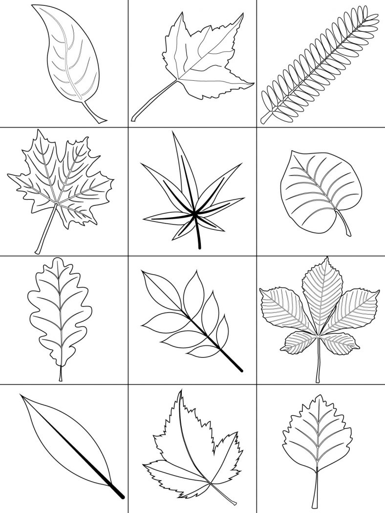 Leaf Coloring Pages Fall