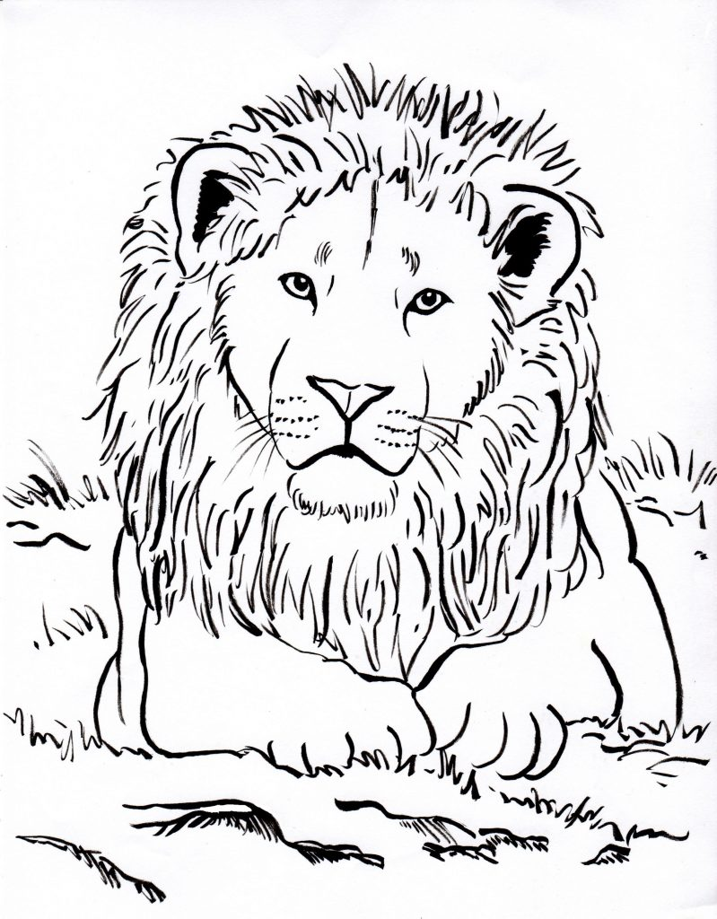 Lion Coloring Pages Realistic
