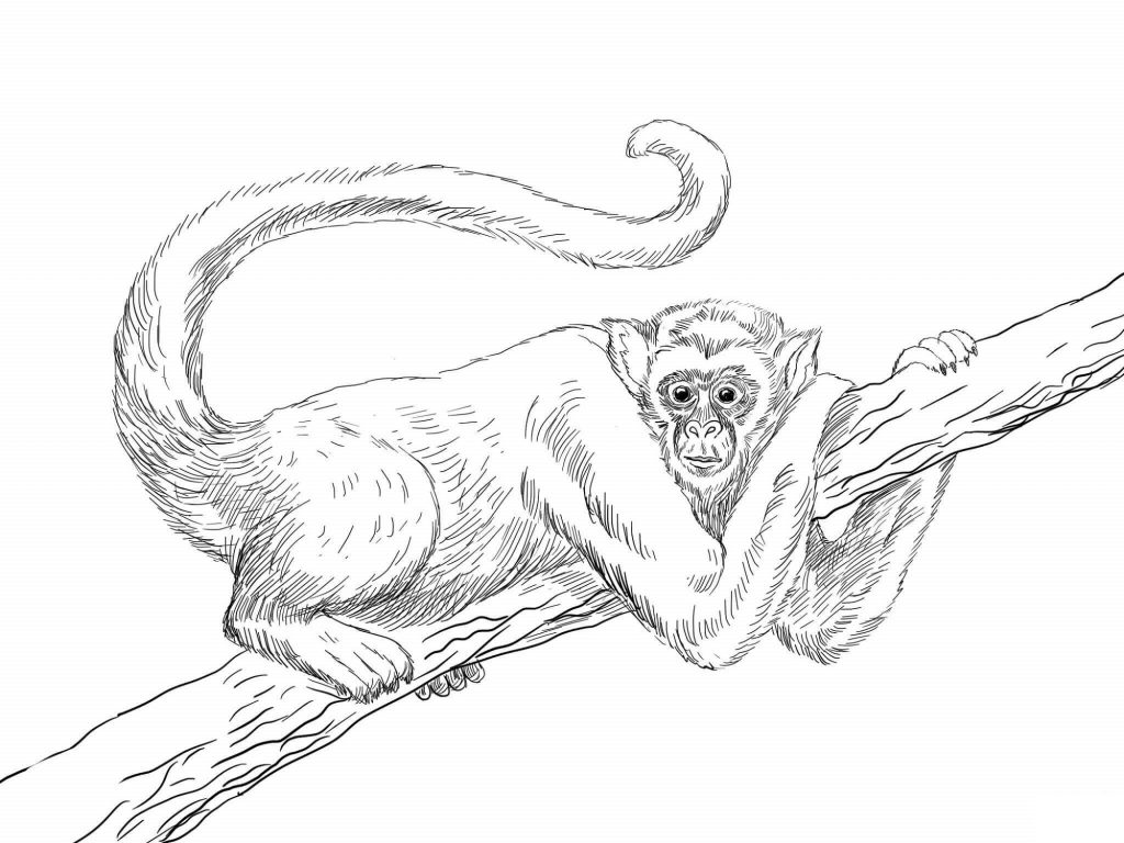 Monkey Coloring Pages Realistic