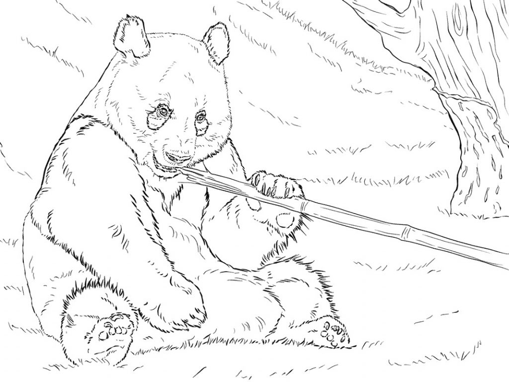 Panda Coloring Pages Eating