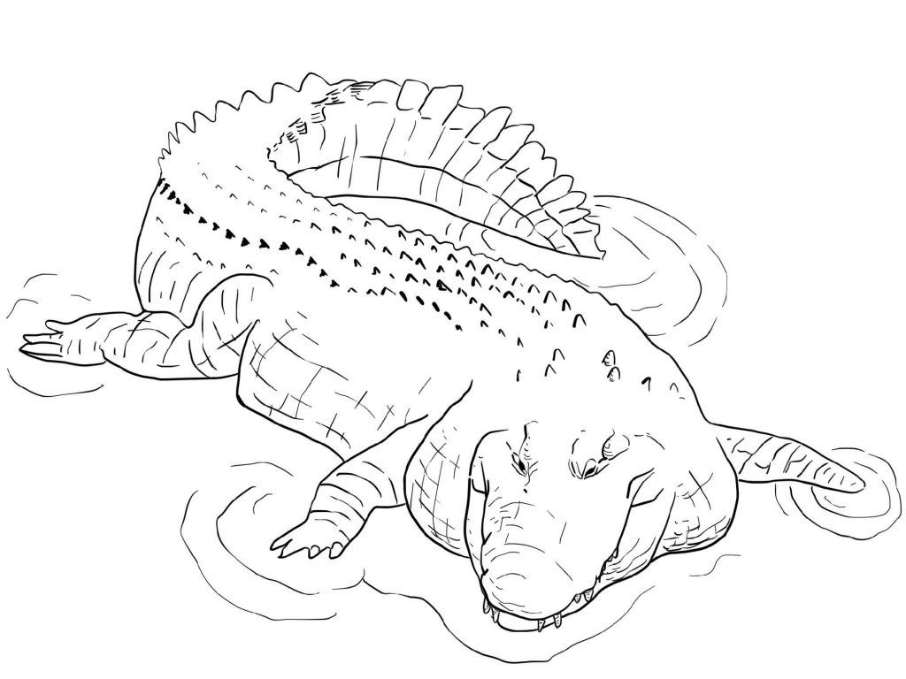 Saltwater Crocodile Coloring Pages