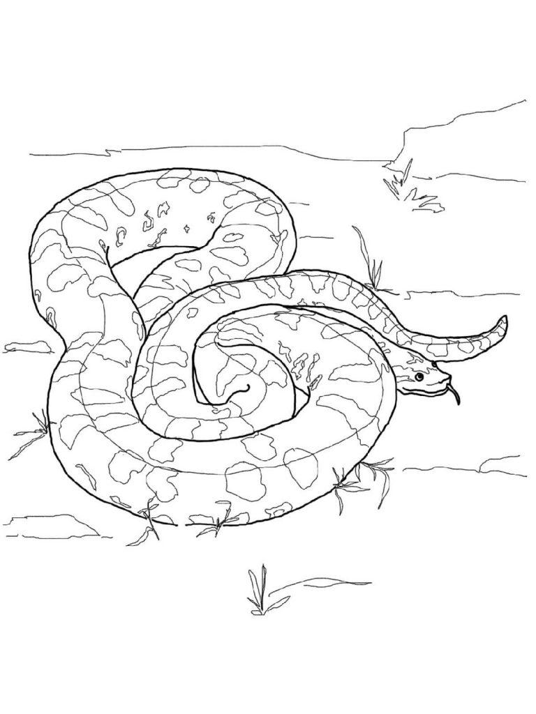 Snake Coloring Pages Anaconda