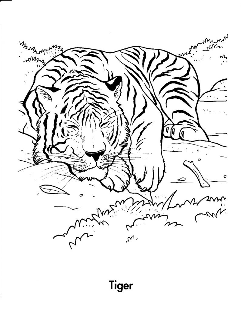 Tiger Coloring Pages Jungle