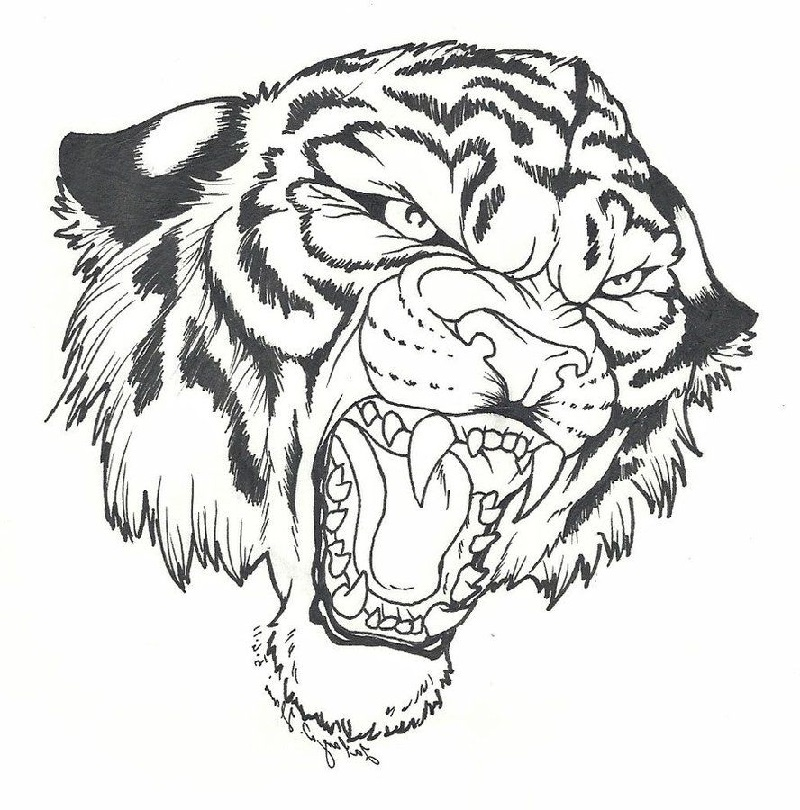 Tiger Coloring Pages For Kids 101