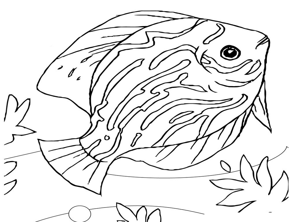 Toddler Coloring Pages Fish