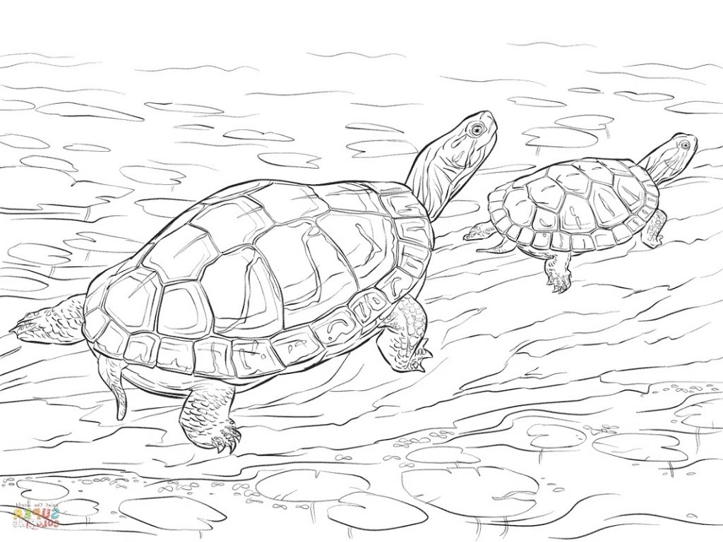 Turtle Coloring Pages Realistic
